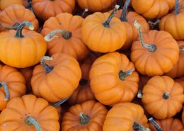 Mini_pumpkins